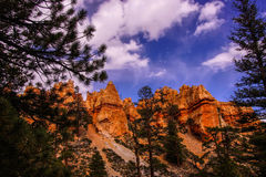 Conifers and Hoodoos Royalty Free Stock Photo