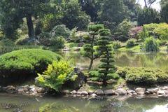 Conifers na wyspie Fotografia Royalty Free