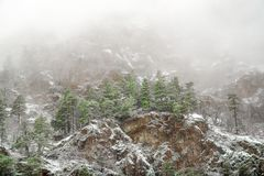 Conifers on a rocky mountain in the fog. Russia Caucasus Teberda royalty free stock images