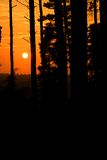 Conifers at sunset Royalty Free Stock Photography