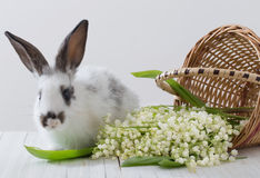 conigli con i fiori della molla Immagine Stock Libera da Diritti