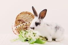 conigli con i fiori della molla Fotografia Stock