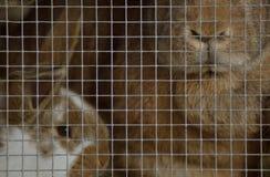 Conigli in conigliera fotografia stock libera da diritti