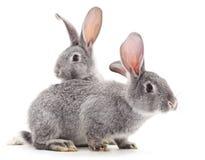 Conigli del bambino Immagine Stock Libera da Diritti