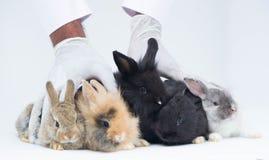 Conigli del bambino che si siedono insieme Immagini Stock Libere da Diritti