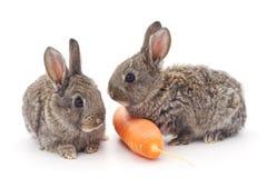 Conigli del bambino con la carota Fotografia Stock