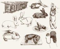 Conigli di allevamento Fotografie Stock Libere da Diritti
