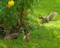 Conigli e scoiattolo Fotografia Stock