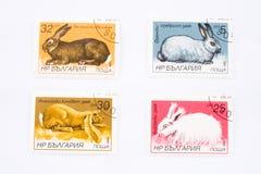 Conigli sui francobolli Fotografia Stock