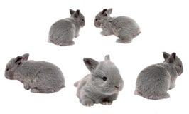 Coniglietti del bambino Immagini Stock
