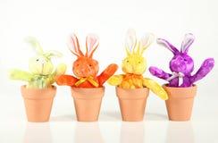 Coniglietti di germogliatura Fotografie Stock