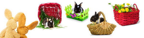 Coniglietti di pasqua, canestri di Pasqua, Pasqua Fotografia Stock