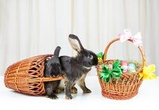 Coniglietti neri vicino ai canestri di Pasqua Immagini Stock Libere da Diritti