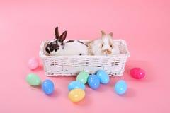 Coniglietti sul colore rosa Immagine Stock