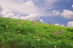 Coniglietti in un prato fresco. Fotografia Stock