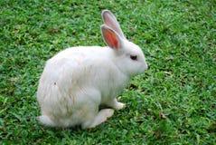 Coniglietto Fotografia Stock