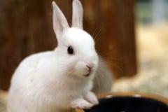 Coniglietto Immagini Stock Libere da Diritti