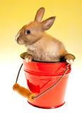 Coniglietto in benna fotografia stock
