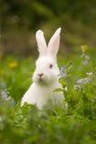 Coniglietto bianco immagine stock