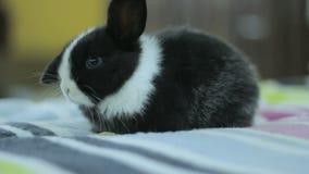 Coniglietto in bianco e nero del bambino, coniglio stock footage