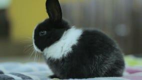 Coniglietto in bianco e nero del bambino, coniglio archivi video