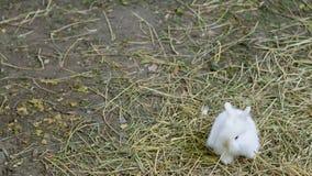 Coniglietto bianco sveglio Fotografie Stock