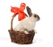Coniglietto in cestino Fotografia Stock