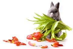 Coniglietto che tiene un mazzo dei tulipani Fotografie Stock Libere da Diritti