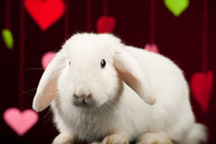 Coniglietto con i biglietti di S. Valentino. Coniglio del biglietto di S. Valentino Immagini Stock