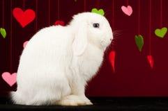 Coniglietto con i biglietti di S. Valentino. Coniglio del biglietto di S. Valentino Fotografia Stock