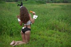 Coniglietto con i frutti immagini stock libere da diritti