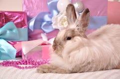 Coniglietto con i presente immagine stock