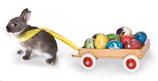 Coniglietto con il carrello Fotografia Stock
