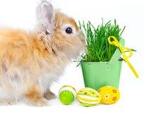 Coniglietto con le uova di Pasqua fotografia stock