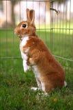 Coniglietto curioso che osserva intorno fotografia stock