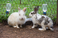Coniglietto dei conigli nel giardino Fotografie Stock