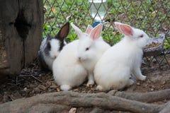 Coniglietto dei conigli nel giardino Immagine Stock