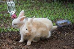 Coniglietto dei conigli nel giardino Fotografia Stock Libera da Diritti