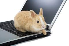 Coniglietto del bambino sul computer portatile, isolato Fotografia Stock