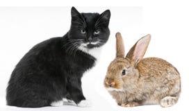 Coniglietto del gatto e del coniglio del gattino Fotografie Stock Libere da Diritti