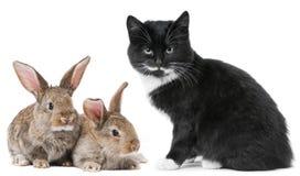 Coniglietto del gatto e del coniglio del gattino Fotografia Stock