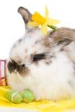Coniglietto della sorgente fotografie stock libere da diritti