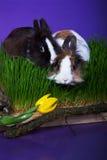 Coniglietto di due pasqua nell'erba Fotografia Stock Libera da Diritti