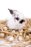 Coniglietto di Eaaster immagine stock