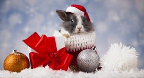 Coniglietto di Natale di festa in cappello di Santa sul fondo del contenitore di regalo Fotografia Stock