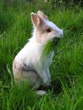 Coniglietto di pasqua fotografia stock libera da diritti