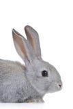 Coniglietto di pasqua Fotografie Stock Libere da Diritti