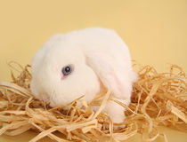 Coniglietto di pasqua bianco Fotografia Stock