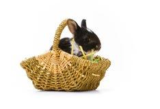 Coniglietto di pasqua in cestino Fotografia Stock Libera da Diritti