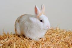 Coniglietto di pasqua che si siede nel fieno Fotografie Stock Libere da Diritti